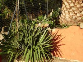Foto 2 Schoenes sonniges Haus in Spanien