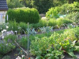 Schreber/Kleingarten in Bo-Hiltrop aus Altersgründen abzugeben