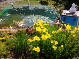 Foto 3 Schrebergarten mit schönem Gartenhaus abzugeben