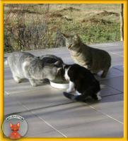 Foto 3 Schüchterner Alvin sucht liebevolles Zuhause