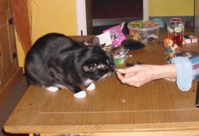 Foto 2 Schwarze Katze ''mit weissen Socken'' in liebevolles zu Hause abzugeben.