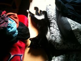 Foto 3 Schwarze Katze ''mit weissen Socken'' in liebevolles zu Hause abzugeben.