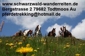 Schwarzwald-Wanderreiten, geführte Wanderritte ab Todtmoos Au