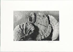 Foto 3 Schwarzweissfotos auf Barytpapier