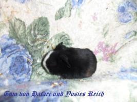 Foto 3 Schweizer Teddys