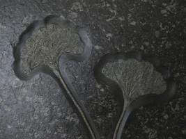 Foto 2 Seelilie, Platte mit 2 Seelilien Holzmaden zu verkaufen