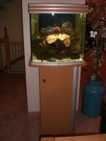 Seewasser Aquarium