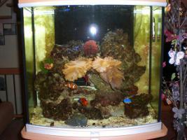 Foto 2 Seewasser Aquarium