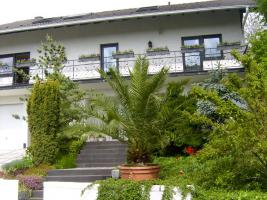 Foto 2 Sehr schön gewachsene Phönix-Palme