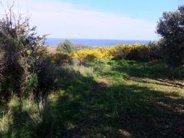 Sehr schönes Grundstück in idyllischer Lage/Griechenland