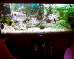 Sehr schönes Koplett Aquarium