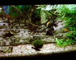 Foto 2 Sehr schönes Koplett Aquarium