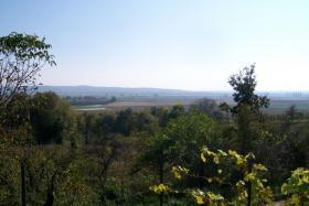 Foto 5 Sehr schon gelegenes Haus auf einem Weinberg Slowakei