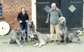 Foto 5 Sehr vielversprechende Irish Wolfhoundwelpen mit Papieren