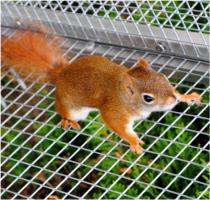 Foto 2 Sehr zahme Hörnchenarten zum verlieben