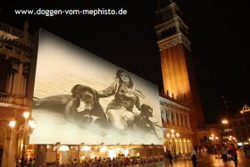 Foto 6 Seit 1979 Deutsche Doggen vom Mephisto