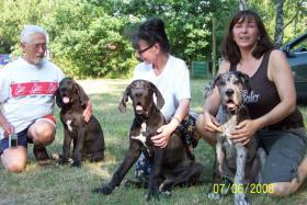 Foto 2 Seit 1979 Deutsche  Doggen vom Mephisto