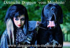 Foto 4 Seit 1979 - Deutsche Doggen ´vom Mephisto´