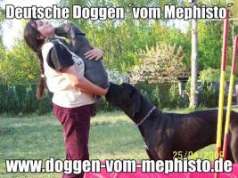 Foto 6 Seit 1979 - Deutsche Doggen ´vom Mephisto´