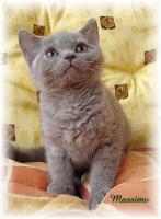 Foto 3 Selkirk Rex-Kätzchen