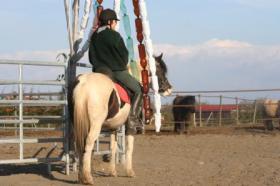 Foto 3 Seltenes Pottok Pony, Rappscheckstute mit blauem Auge, Stm. 140 cm, 5jährig