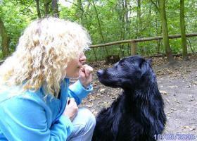 Seminar in Tierkommunikation für Anfänger