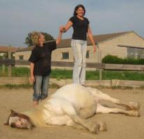 Foto 2 Seminarerlebnis: Einführung in die Welt der Pferdesprache!