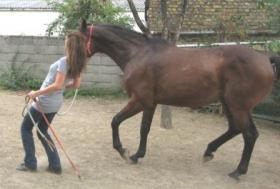 Foto 3 Seminarerlebnis: Einführung in die Welt der Pferdesprache!