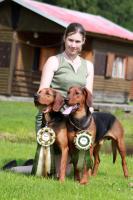 Foto 3 Serbischer Laufhund