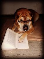 Shar Pei ( chinesischer Faltenhund ) sucht neuen Wirkungskreis