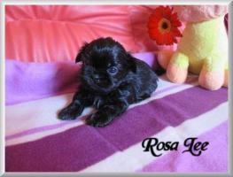 H Rosa Lee 4 W