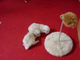 Siam Babys reinrassig zu verkaufen