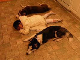 Foto 5 Siberian Husky Welpen geb. am 31.12.2009
