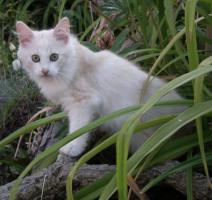 Foto 2 Sibirerkätzchen suchen neue Schmuseopfer