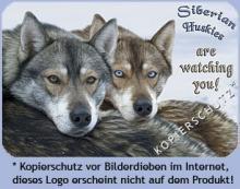 Sibirien Husky - Metall Warnschild