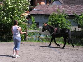 Foto 2 Sie wünschen sich eine harmonische Pferd-Mensch-Beziehung?