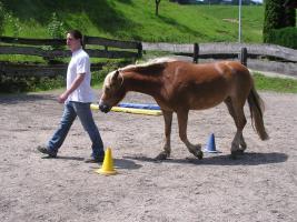 Foto 3 Sie wünschen sich eine harmonische Pferd-Mensch-Beziehung?