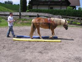 Foto 4 Sie wünschen sich eine harmonische Pferd-Mensch-Beziehung?