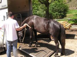 Foto 5 Sie wünschen sich eine harmonische Pferd-Mensch-Beziehung?