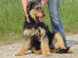 Foto 3 Silvester - ein Traumhund sucht