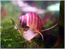 Skalare, Barben, Zwergfadenfische, Fadenfische, Zwergkrallenfr�sche, Pflanzen, Mutterpflanzen, etc.