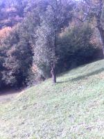 Foto 2 Slowenien Grundstück und Wald zu verkaufen