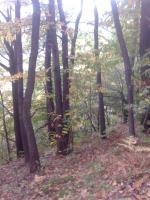 Foto 3 Slowenien Grundstück und Wald zu verkaufen