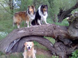 Sonjas-Hundeschule Welpenschule Agility