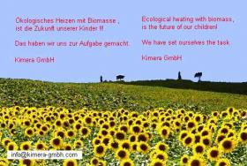 Foto 2 Sonnenblumenpellet  ,  Oelpellet