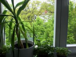 Sonnige Balkonwohnung - frei Sommer/Herbst 2011