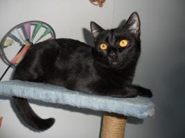 """""""Sophie"""" (geb. September 2011) sucht ein neues Zuhause mit Freigang"""