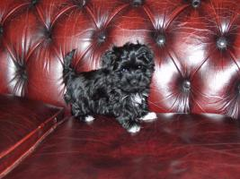 Foto 3 Soziabel Hunde mit Garantie