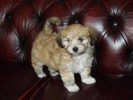 Foto 7 Soziabel Hunde mit Garantie
