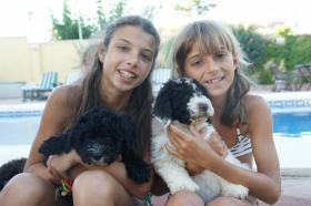 Spanischer  Wasserhund  perro de agua  Familienzucht reinrassig